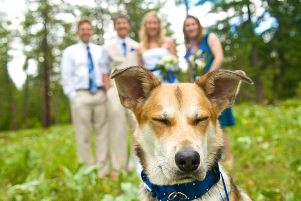 Puppy with Bridal Party